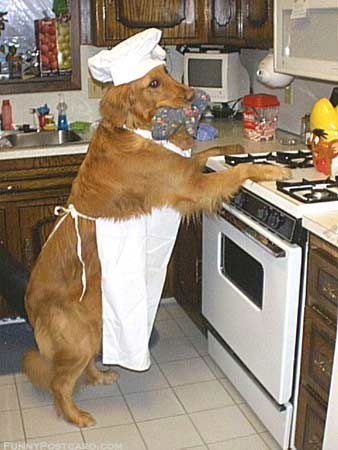 dogcooking.jpg